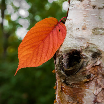 C'est le moment de la cure d'automne